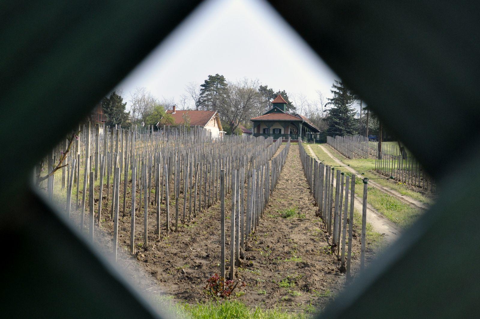 Czeglédi Pince - Kerbor Kft. (Sárfehér sor)